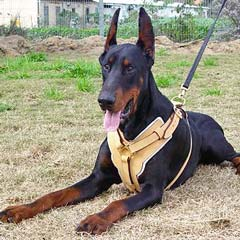 Padded non-restrictive training leather dog harness