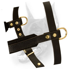 Gorgeous Doberman Harness