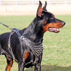 Professional wonderful leather dog harness with spikes