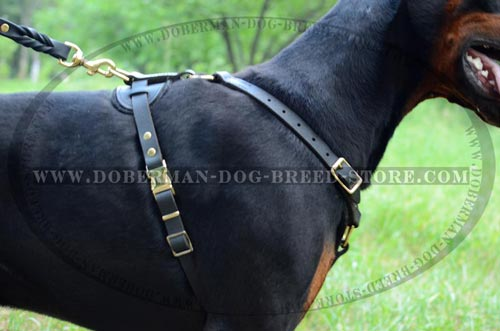 Easy-To-Use Doberman Dog Leather Harness