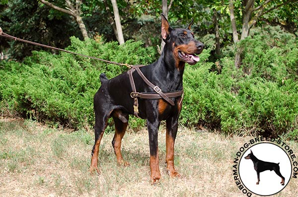 Tracking leather Doberman harness