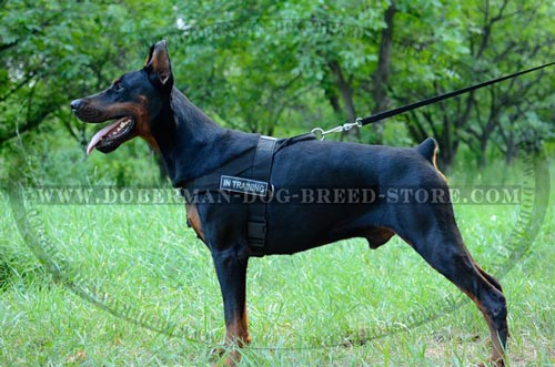 Security-nylon-dog-harness-police-working-dog-harness