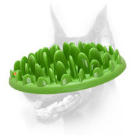 """Green Lawn"" Interactive Slow Eating Plate - Caring Pet Feeder"