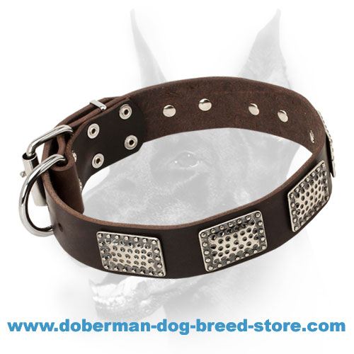Excellent Doberman Dog Collar of Leather with Silver-like Adornment
