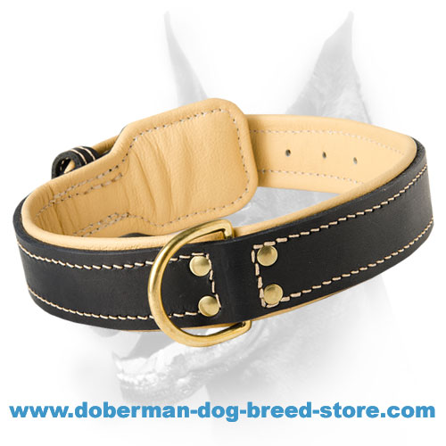 Royal Nappa Padded Hand Made Leather Dog Collar for Dobermans - Click Image to Close