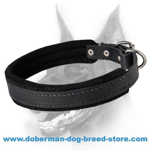 Best Padded Leather Dog Collar - Doberman Collar with Padding 1 inch (2.5cm) width