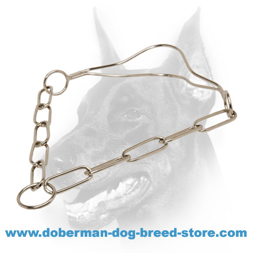 Doberman Dog Chrome-Plated Show Collar