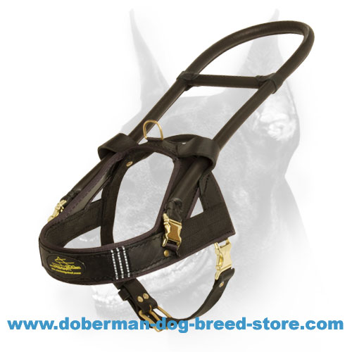 Perfect Doberman Guide Dog Harness with Reflective Strips