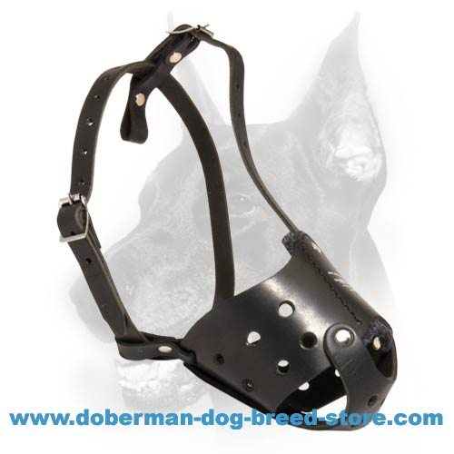 Latigo Safety Muzzle for Doberman