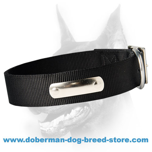 Looking for 2 Ply Nylon Dog Collar w/h name tag/Metal Buckle
