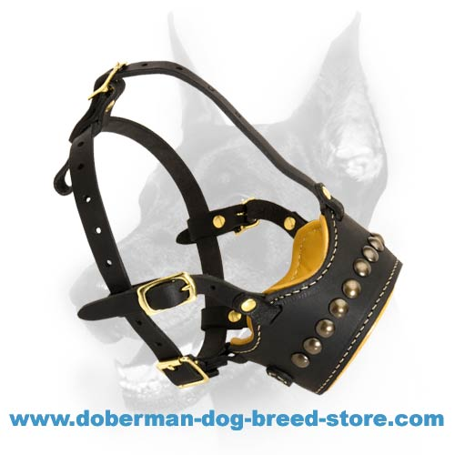 Doberman Dog Obedience Training Muzzle with Stylish Studs