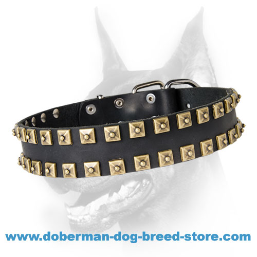 "Newly-Designed Brass Studded Leather Dog Collar - ""Caterpillar"""