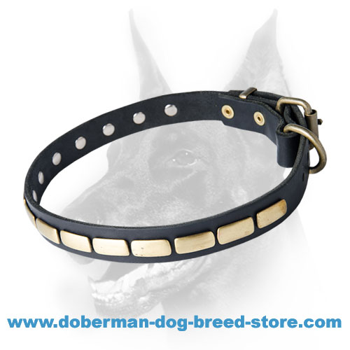 Special Leather Dog Collar With Brass Gold-Like Plates