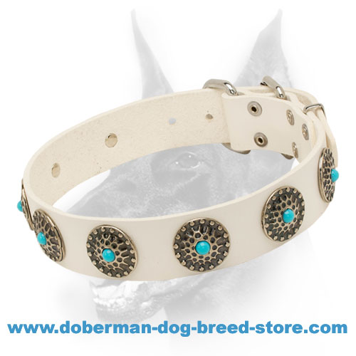 Designer Leather Dog Collar for Walking in Stylie