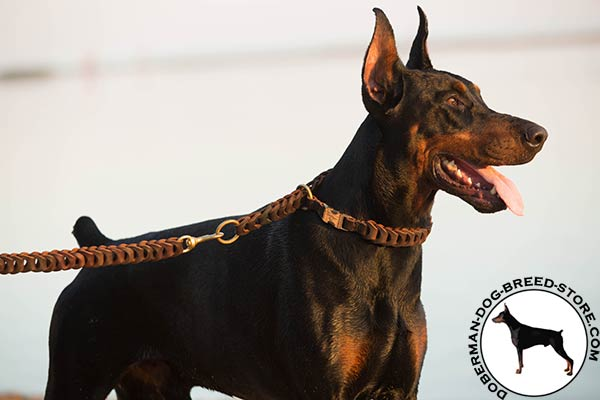 Doberman leather leash with durable brass plated hardware for basic training