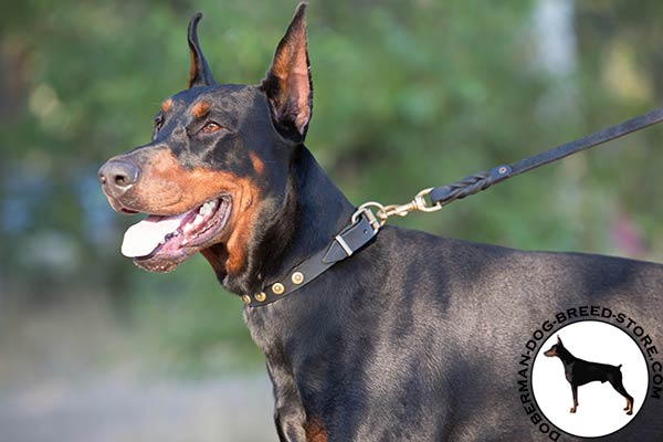 Doberman leather leash with reliable brass plated hardware for safe walking