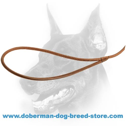 Leather handle of doberman dog round leash