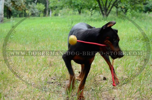 High Quality Playing Ball for Dobermans