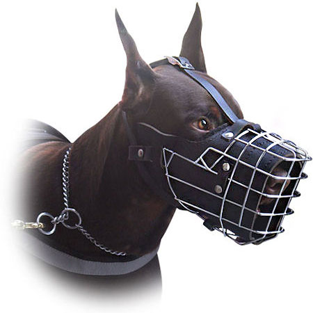 dog muzzles doberman breed