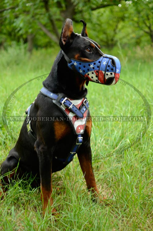 Custom Made Doberman Muzzle