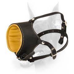 Gorgeous Doberman dog muzzle