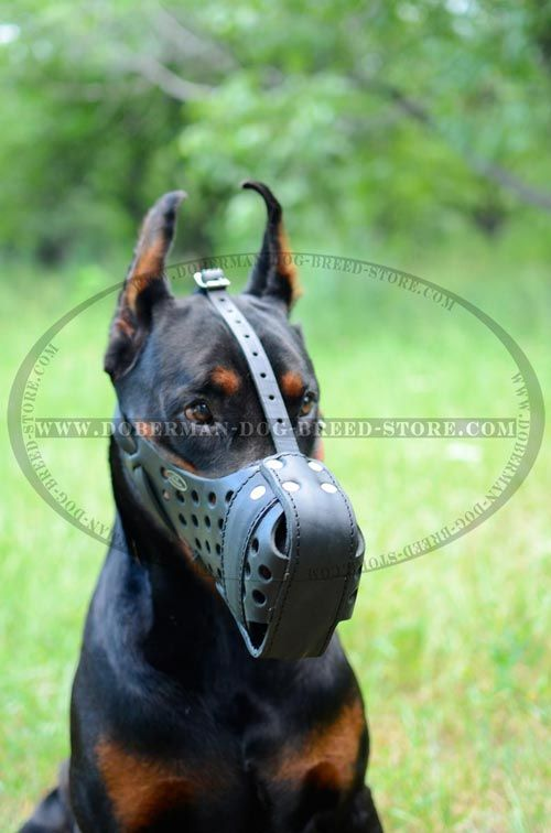 Safety Walk Doberman Dog Muzzle