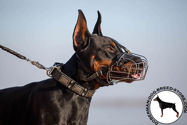 Doberman wire basket muzzle with corrosion resistant hardware for better comfort