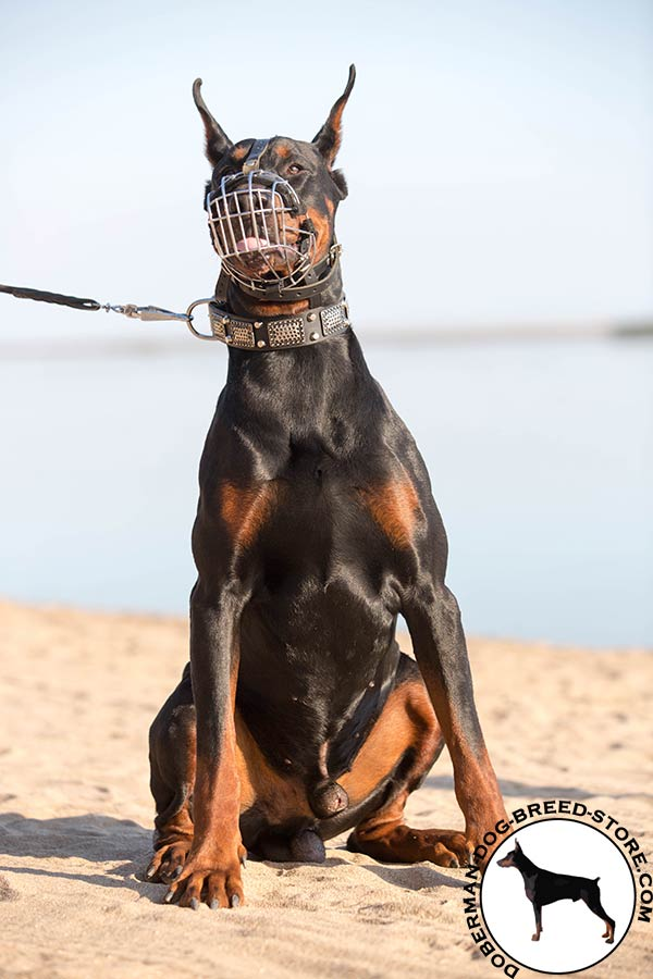Doberman wire basket muzzle with rust-proof nickel plated fittings for daily walks