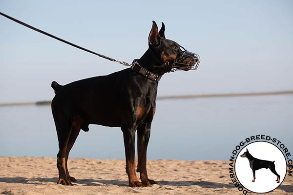 High-quality muzzle for Doberman breed