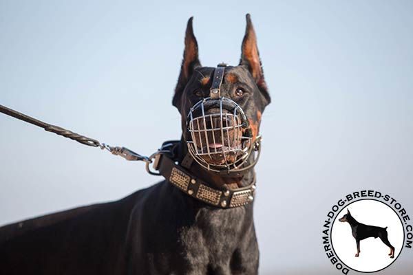 Nose padded muzzle for Doberman