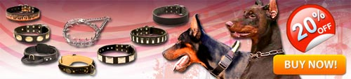 Get Today High Quality Exclusive Doberman Collars