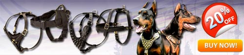 Doberman Harnesses