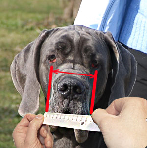 This is a regular was of measuring your dog