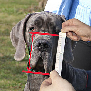 Study how measure your dog's snout