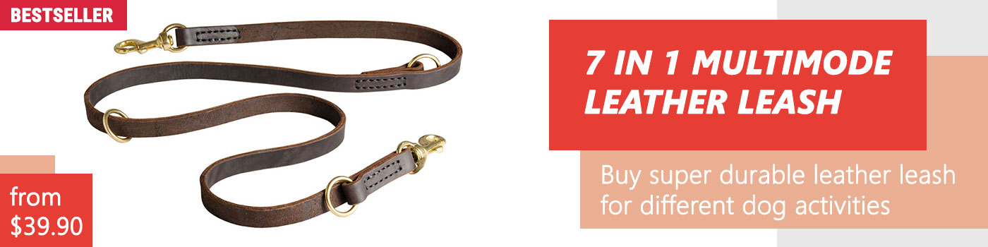 Buy Leather Police Agitation Lead 5,7 FT for Doberman training