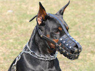 leather dog muzzle for doberman pinscher